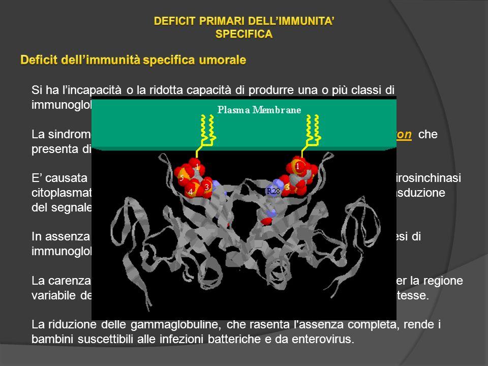 Si ha lincapacità o la ridotta capacità di produrre una o più classi di immunoglobuline, con la conseguente suscettibilità alle infezioni.