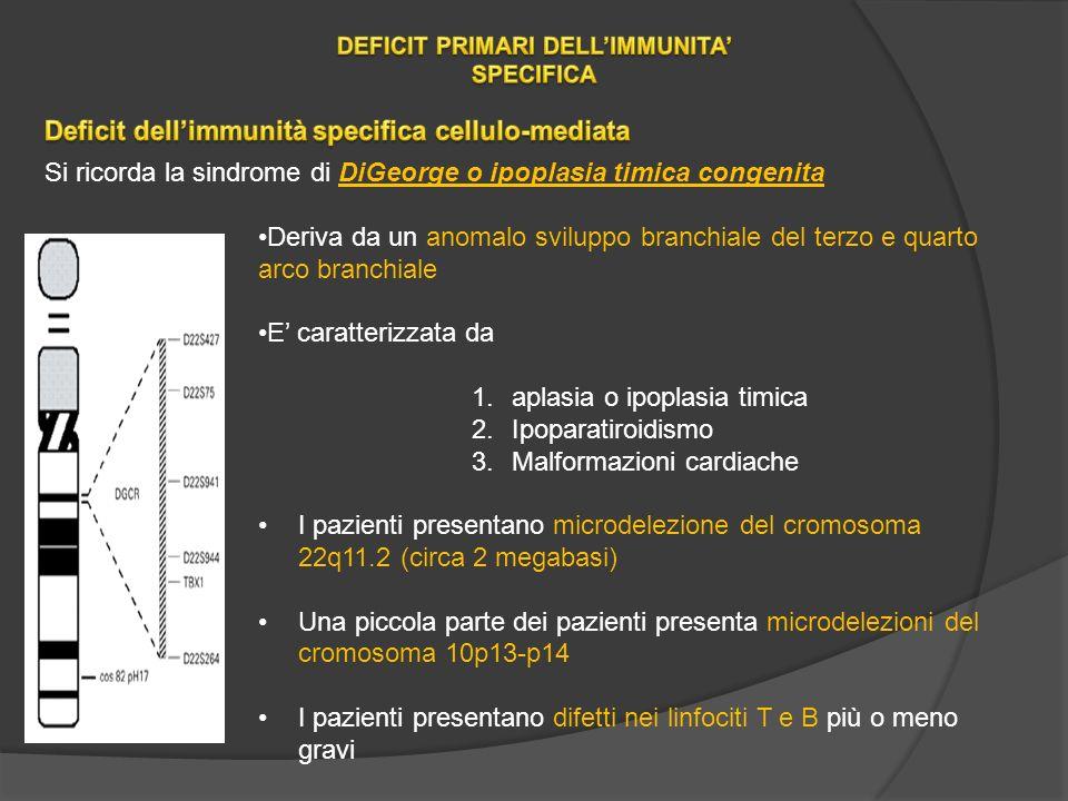 Si ricorda la sindrome di DiGeorge o ipoplasia timica congenita Deriva da un anomalo sviluppo branchiale del terzo e quarto arco branchiale E caratterizzata da 1.aplasia o ipoplasia timica 2.Ipoparatiroidismo 3.Malformazioni cardiache I pazienti presentano microdelezione del cromosoma 22q11.2 (circa 2 megabasi) Una piccola parte dei pazienti presenta microdelezioni del cromosoma 10p13-p14 I pazienti presentano difetti nei linfociti T e B più o meno gravi