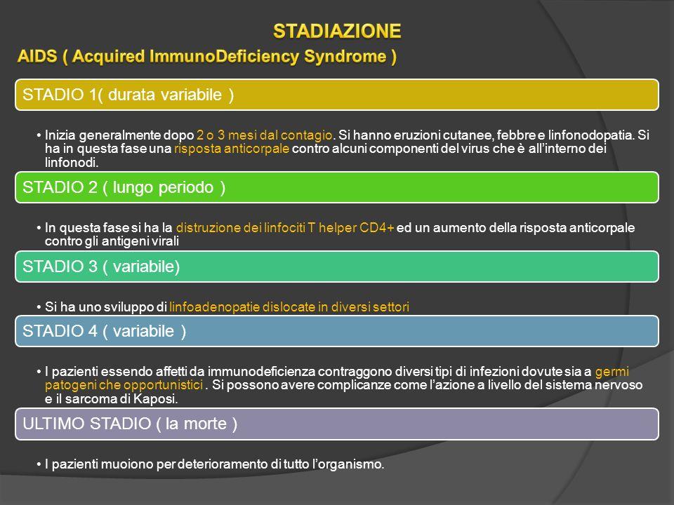 STADIO 1( durata variabile ) Inizia generalmente dopo 2 o 3 mesi dal contagio.