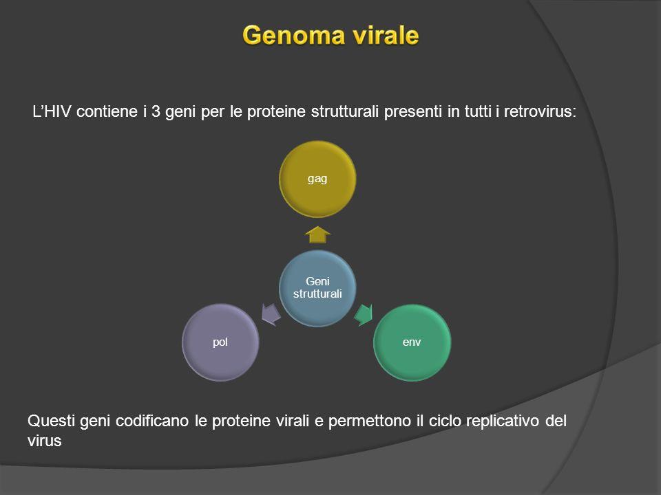 LHIV contiene i 3 geni per le proteine strutturali presenti in tutti i retrovirus: Geni strutturali gagenvpol Questi geni codificano le proteine virali e permettono il ciclo replicativo del virus