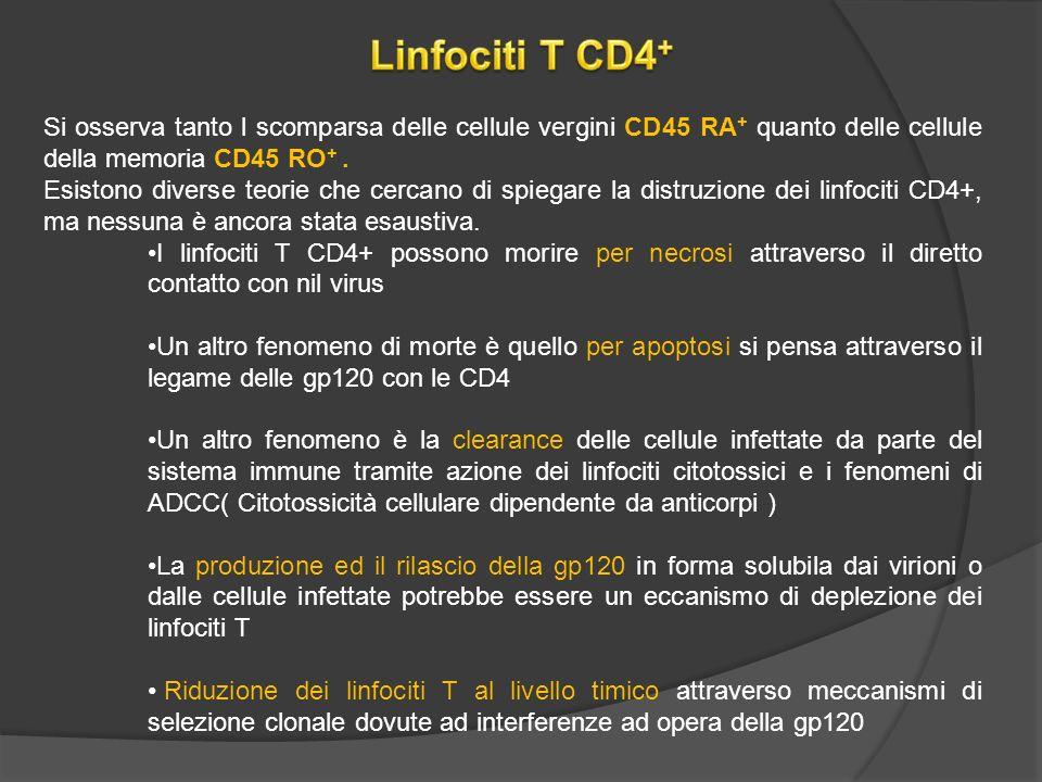 Si osserva tanto l scomparsa delle cellule vergini CD45 RA + quanto delle cellule della memoria CD45 RO +.