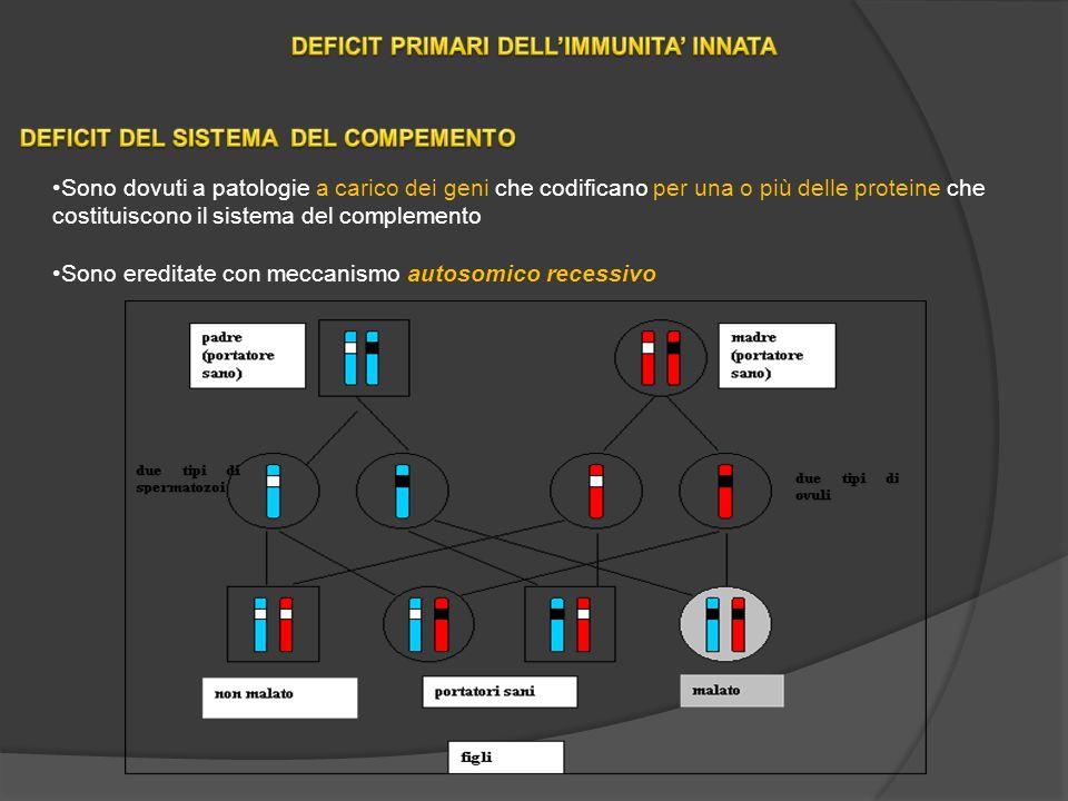 Sono dovuti a patologie a carico dei geni che codificano per una o più delle proteine che costituiscono il sistema del complemento Sono ereditate con meccanismo autosomico recessivo