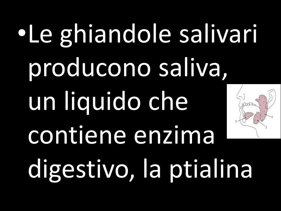 Le ghiandole salivari producono saliva, un liquido che contiene enzima digestivo, la ptialina