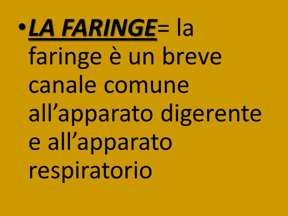 LA FARINGE LA FARINGE= la faringe è un breve canale comune allapparato digerente e allapparato respiratorio