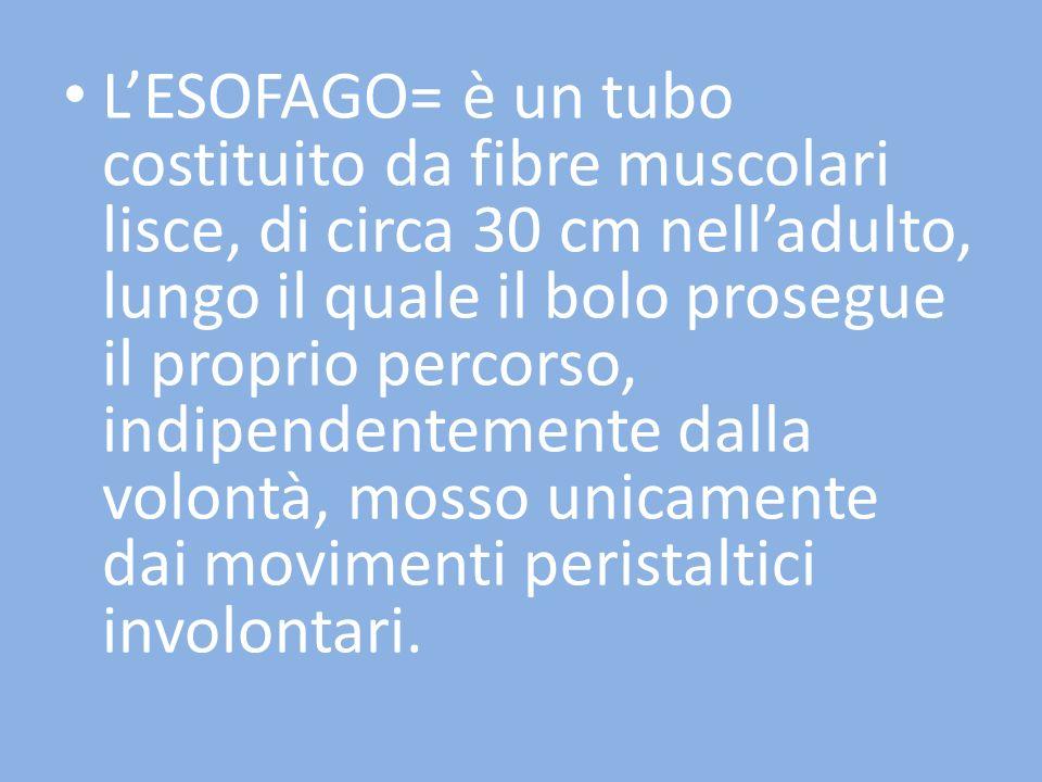 LESOFAGO= è un tubo costituito da fibre muscolari lisce, di circa 30 cm nelladulto, lungo il quale il bolo prosegue il proprio percorso, indipendentem