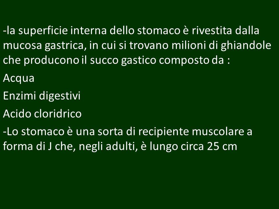-la superficie interna dello stomaco è rivestita dalla mucosa gastrica, in cui si trovano milioni di ghiandole che producono il succo gastico composto
