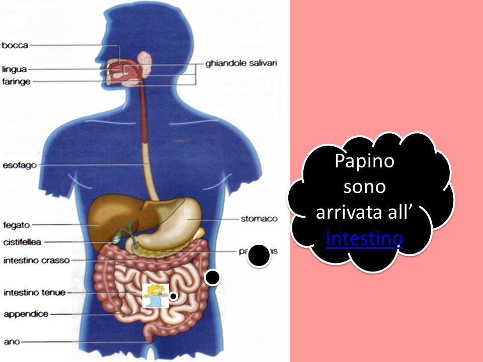 Papino sono arrivata all intestino intestino Papino sono arrivata all intestino intestino