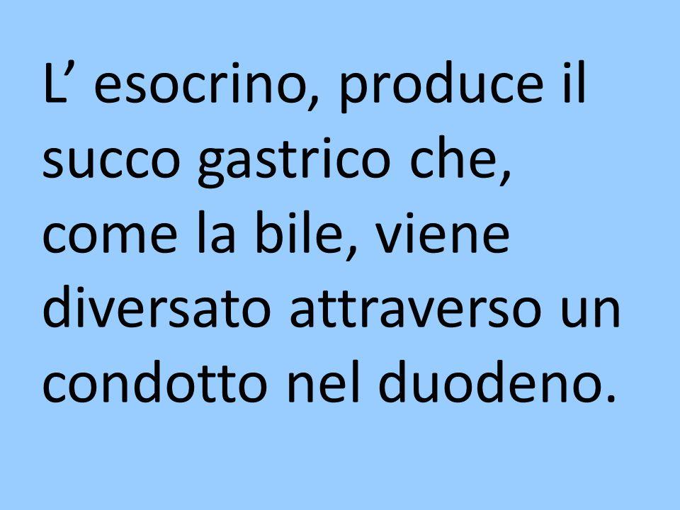 L esocrino, produce il succo gastrico che, come la bile, viene diversato attraverso un condotto nel duodeno.