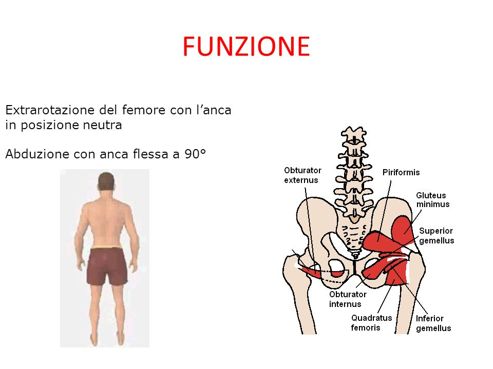 FUNZIONE Extrarotazione del femore con lanca in posizione neutra Abduzione con anca flessa a 90°