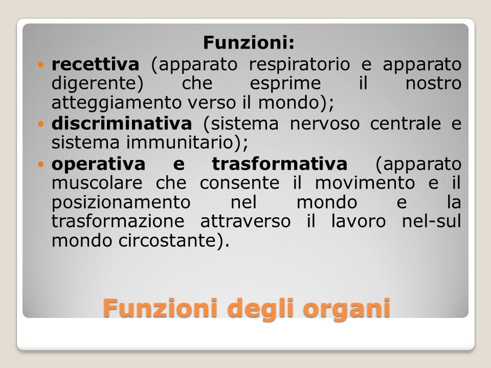Funzioni degli organi Funzioni: recettiva (apparato respiratorio e apparato digerente) che esprime il nostro atteggiamento verso il mondo); discrimina