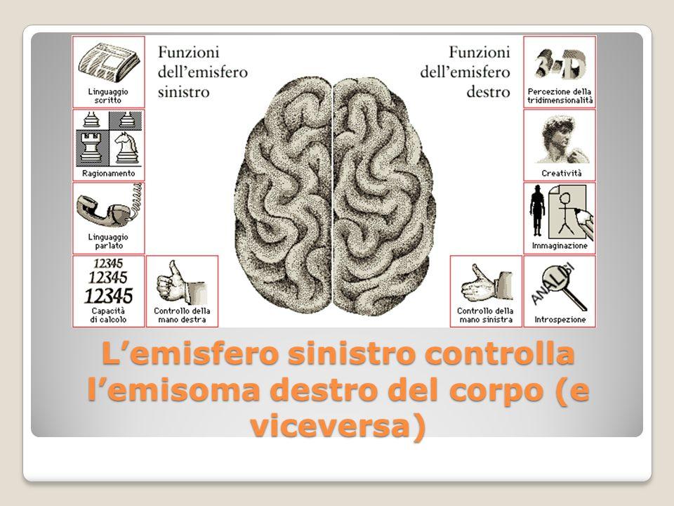 Lemisfero sinistro controlla lemisoma destro del corpo (e viceversa)