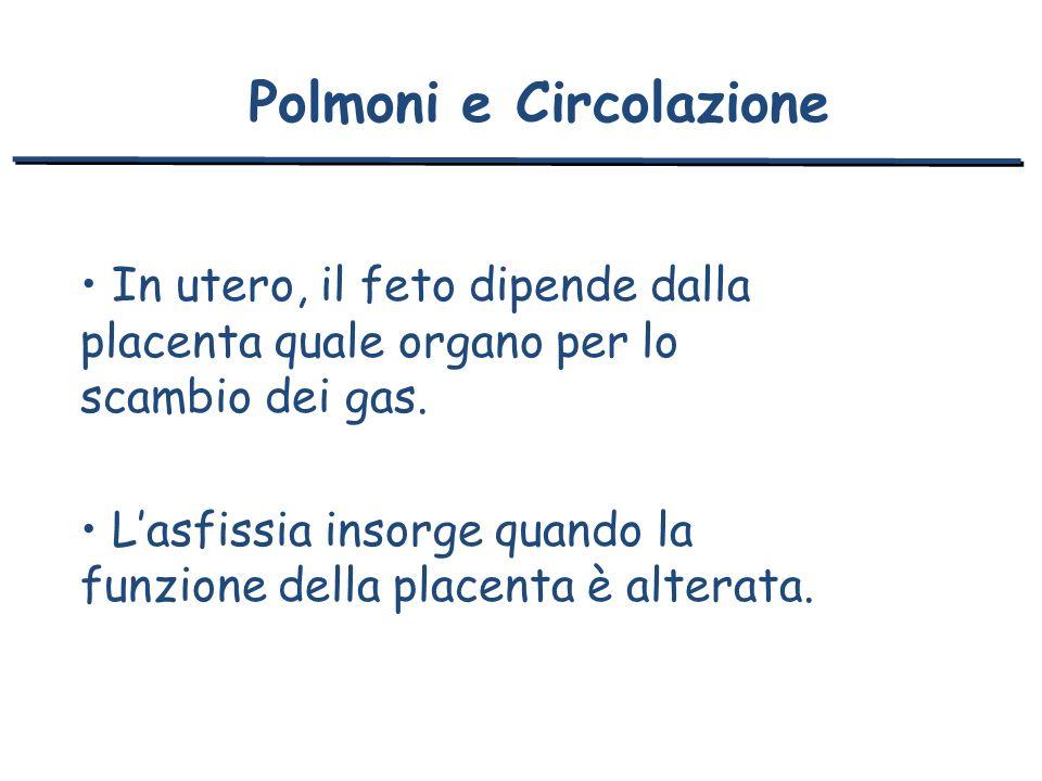 In utero, il feto dipende dalla placenta quale organo per lo scambio dei gas. Lasfissia insorge quando la funzione della placenta è alterata. Polmoni