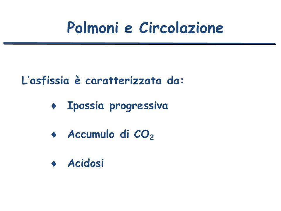 Lasfissia è caratterizzata da: Ipossia progressiva Accumulo di CO 2 Acidosi