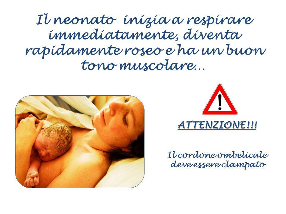 Il neonato inizia a respirare immediatamente, diventa rapidamente roseo e ha un buon tono muscolare… ATTENZIONE!!! Il cordone ombelicale deve essere c
