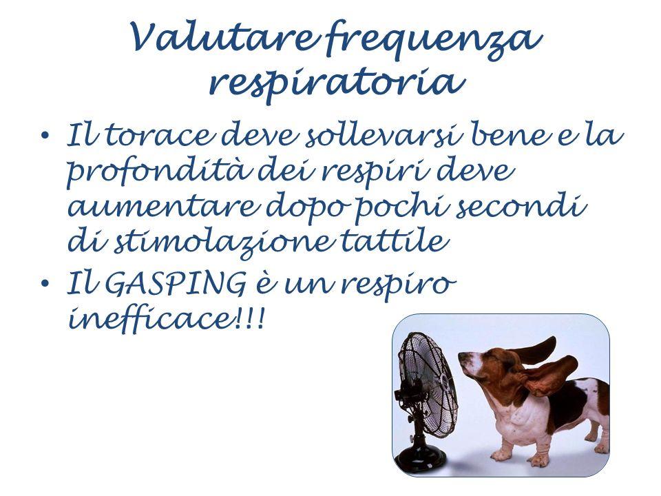 Valutare frequenza respiratoria Il torace deve sollevarsi bene e la profondità dei respiri deve aumentare dopo pochi secondi di stimolazione tattile I
