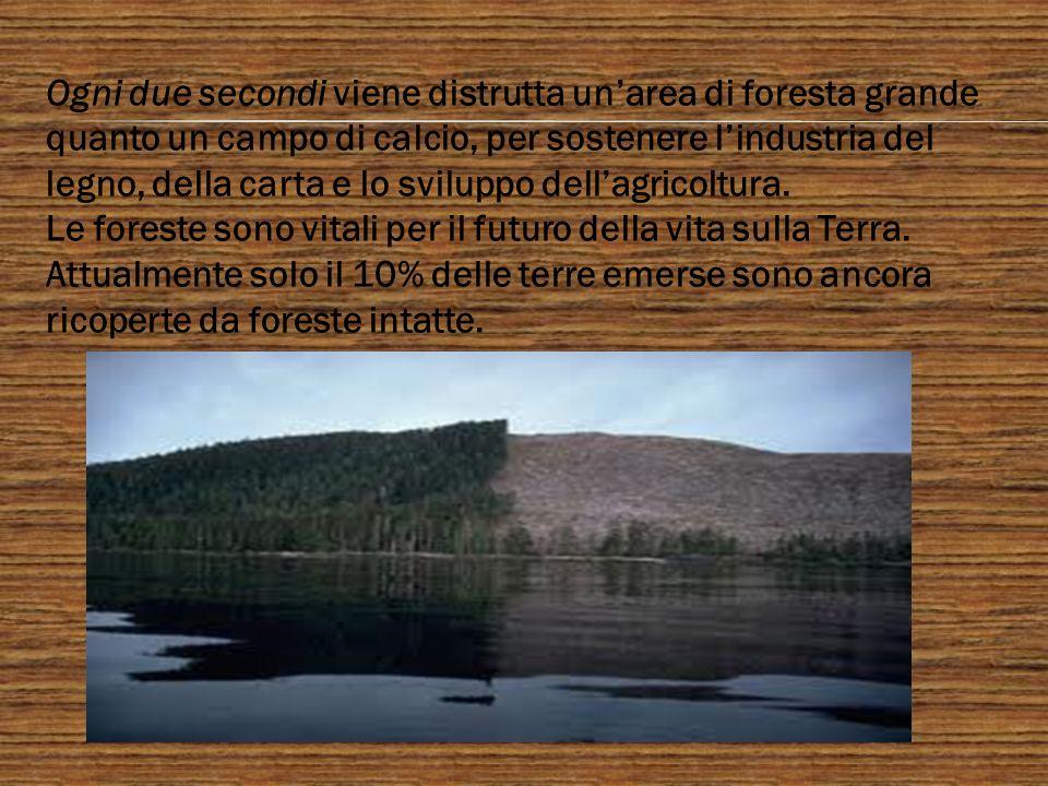 Ogni due secondi viene distrutta unarea di foresta grande quanto un campo di calcio, per sostenere lindustria del legno, della carta e lo sviluppo del