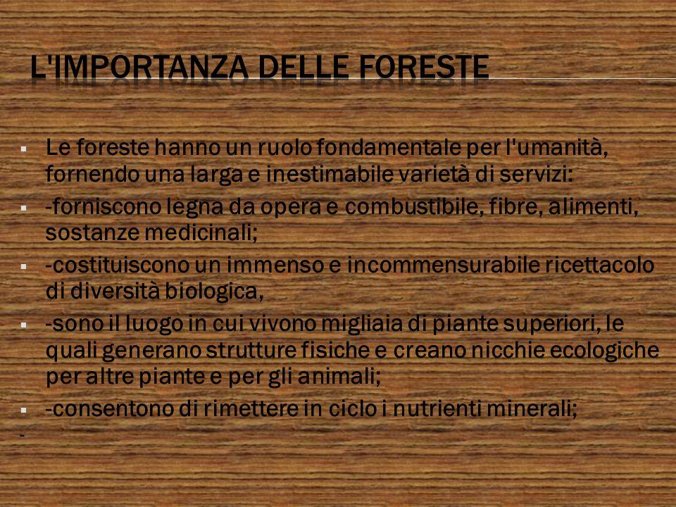Le foreste hanno un ruolo fondamentale per l'umanità, fornendo una larga e inestimabile varietà di servizi: -forniscono legna da opera e combustibile,