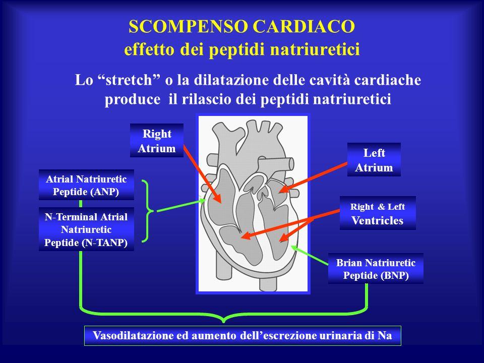 SCOMPENSO CARDIACO effetto dei peptidi natriuretici Brian Natriuretic Peptide (BNP) Lo stretch o la dilatazione delle cavità cardiache produce il rila