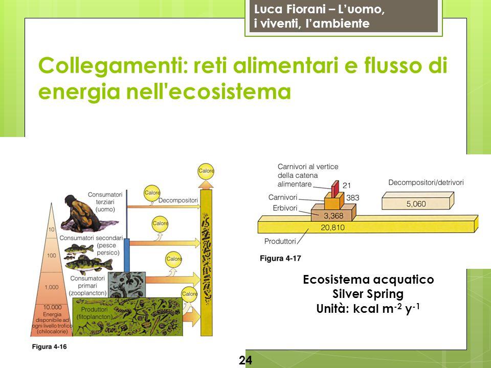 Luca Fiorani – Luomo, i viventi, lambiente Collegamenti: reti alimentari e flusso di energia nell'ecosistema 24 Ecosistema acquatico Silver Spring Uni
