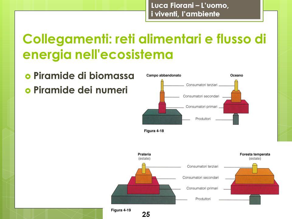Luca Fiorani – Luomo, i viventi, lambiente Collegamenti: reti alimentari e flusso di energia nell'ecosistema 25 Piramide di biomassa Piramide dei nume