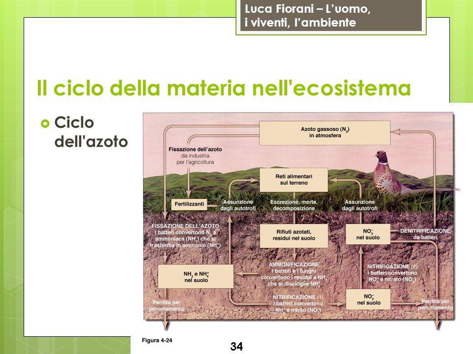 Luca Fiorani – Luomo, i viventi, lambiente Il ciclo della materia nell'ecosistema 34 Ciclo dell'azoto