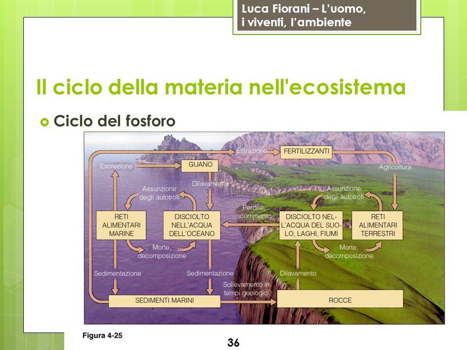 Luca Fiorani – Luomo, i viventi, lambiente Il ciclo della materia nell'ecosistema 36 Ciclo del fosforo