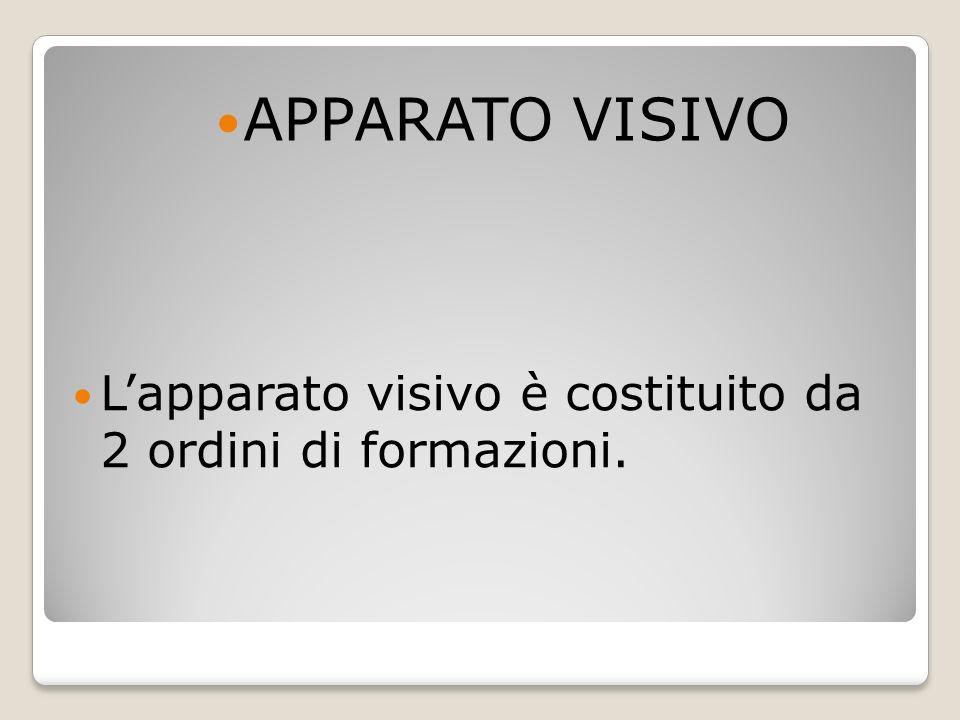 Lapparato visivo è costituito da 2 ordini di formazioni. APPARATO VISIVO
