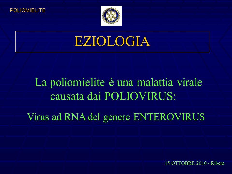 EZIOLOGIA La poliomielite è una malattia virale causata dai POLIOVIRUS: Virus ad RNA del genere ENTEROVIRUS 15 OTTOBRE 2010 - Ribera POLIOMIELITE