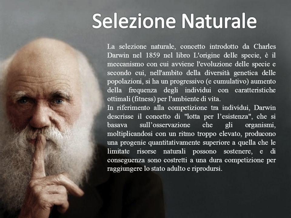 La selezione naturale, concetto introdotto da Charles Darwin nel 1859 nel libro L'origine delle specie, è il meccanismo con cui avviene l'evoluzione d