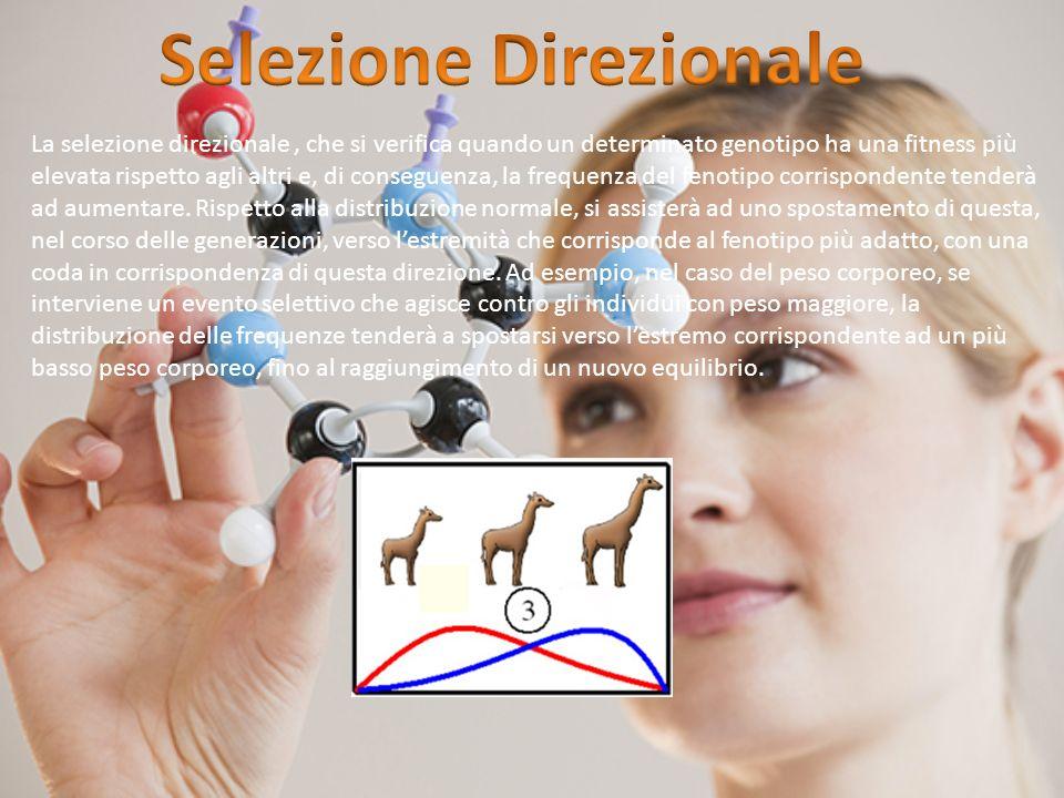 La selezione direzionale, che si verifica quando un determinato genotipo ha una fitness più elevata rispetto agli altri e, di conseguenza, la frequenz