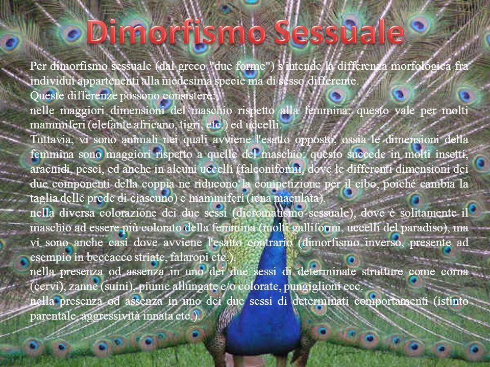 Per dimorfismo sessuale (dal greco