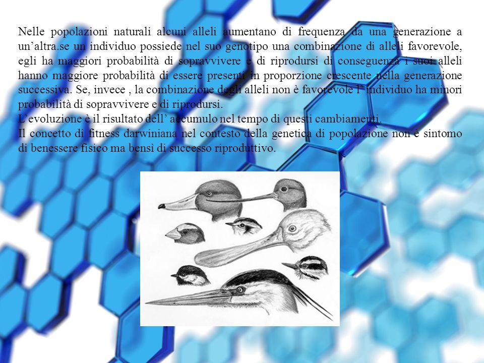 Nelle popolazioni naturali alcuni alleli aumentano di frequenza da una generazione a unaltra.se un individuo possiede nel suo genotipo una combinazion