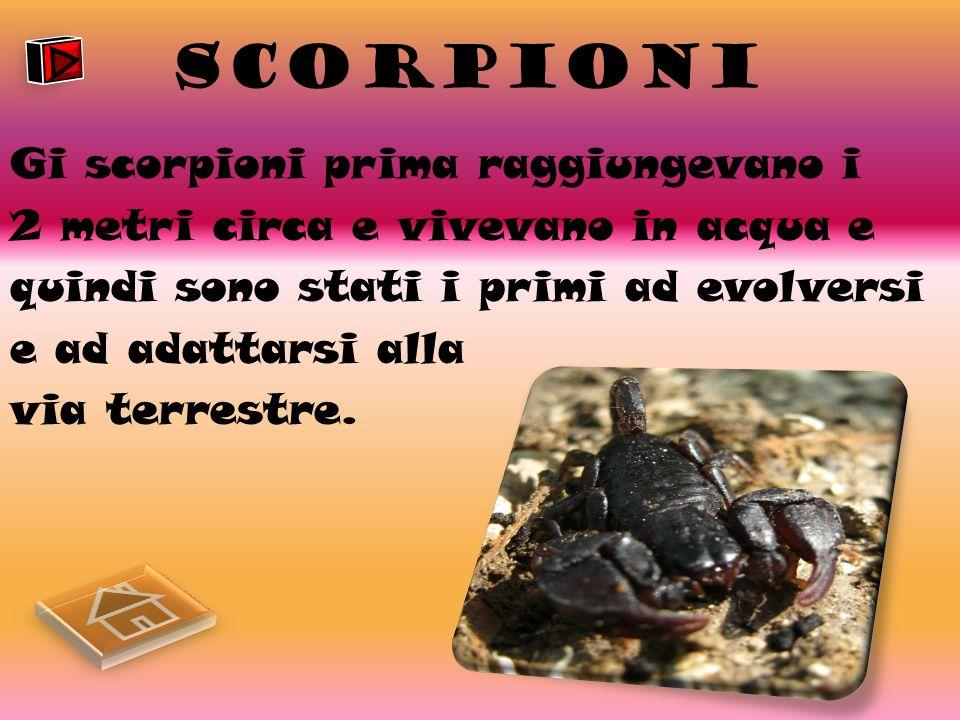 SCORPIONI Gi scorpioni prima raggiungevano i 2 metri circa e vivevano in acqua e quindi sono stati i primi ad evolversi e ad adattarsi alla via terrestre.