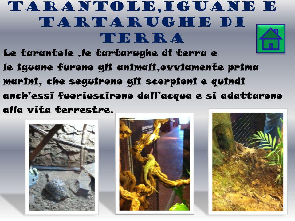 Tarantole,IGUANE E TARTARUGHE di TERRA Le tarantole,le tartarughe di terra e le iguane furono gli animali,ovviamente prima marini, che seguirono gli scorpioni e quindi anchessi fuoriuscirono dallacqua e si adattarono alla vita terrestre.