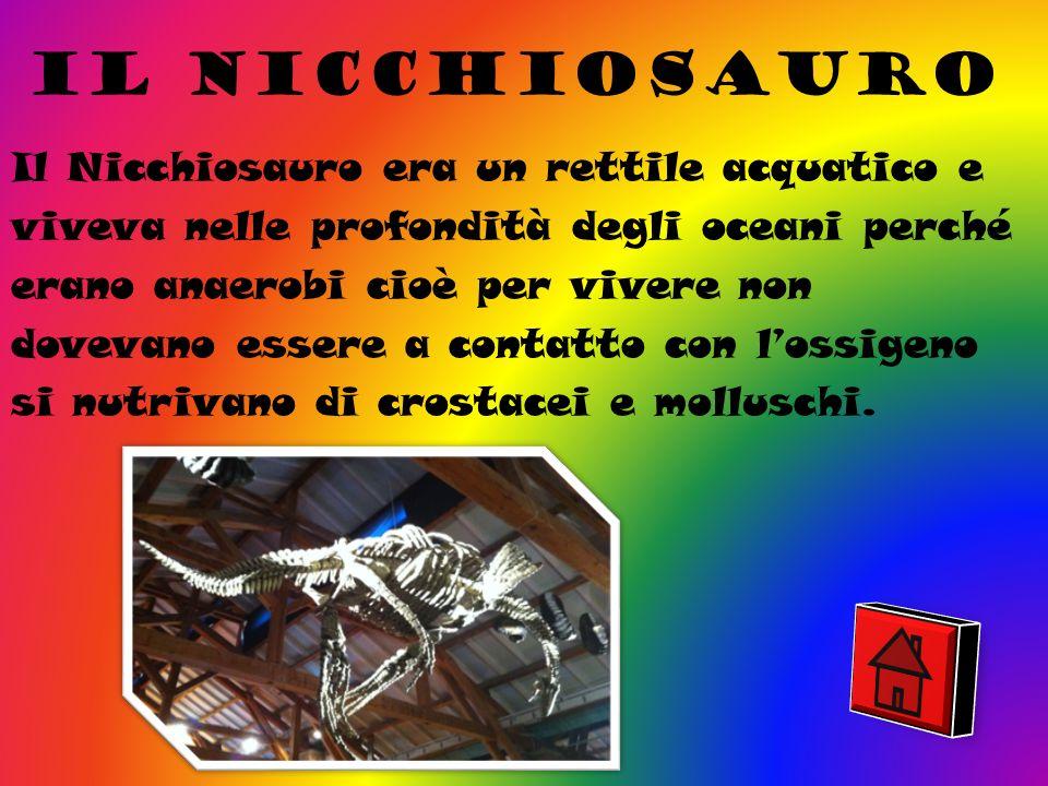Il nicchiosauro Il Nicchiosauro era un rettile acquatico e viveva nelle profondità degli oceani perché erano anaerobi cioè per vivere non dovevano essere a contatto con lossigeno si nutrivano di crostacei e molluschi.