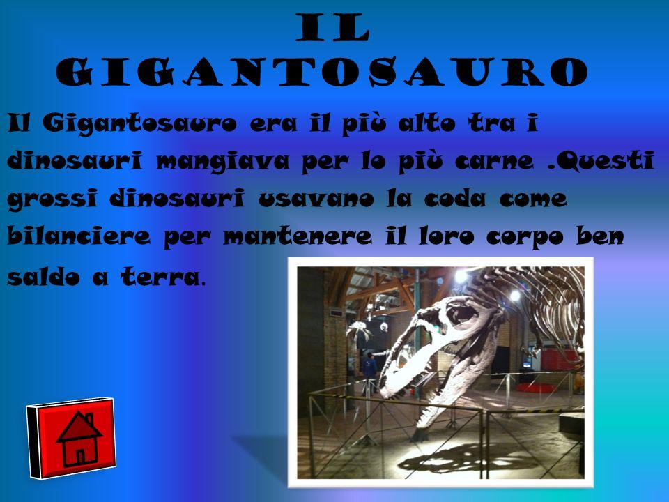 il gigantosauro Il Gigantosauro era il più alto tra i dinosauri mangiava per lo più carne.Questi grossi dinosauri usavano la coda come bilanciere per mantenere il loro corpo ben saldo a terra.