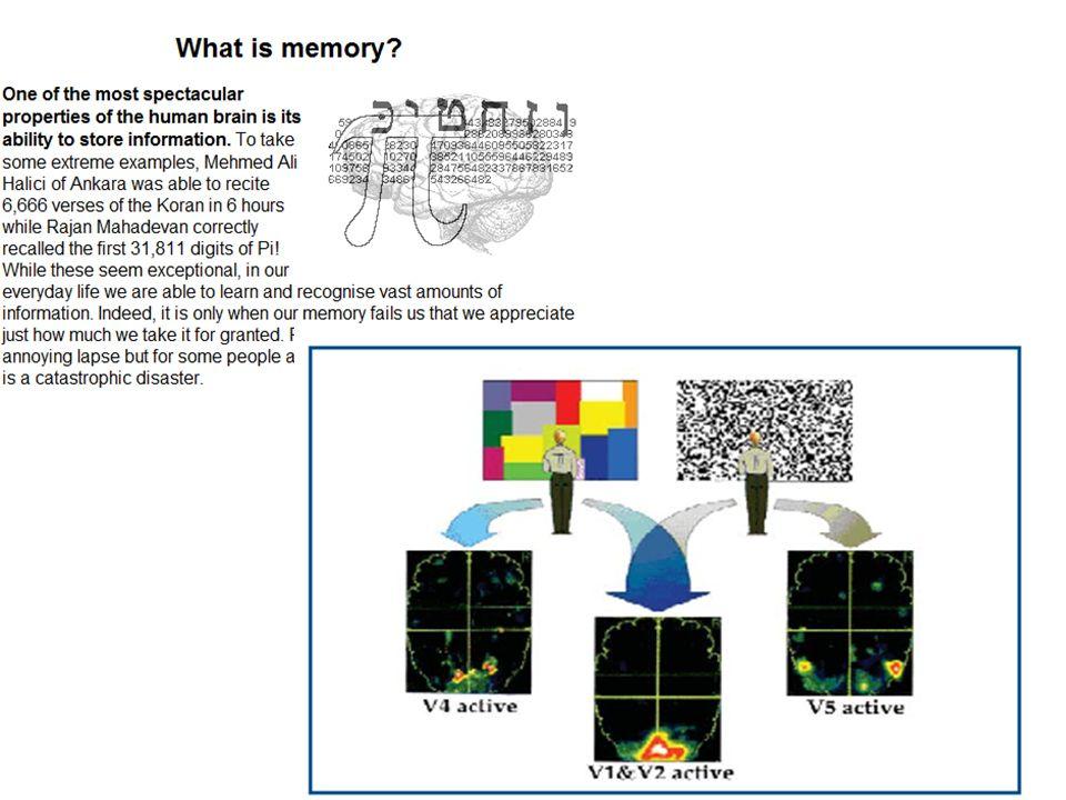 Antonio Battro: intelligenza digitale nuova forma di intelligenza - Opzione click - Euristica digitale -Intelligenza pragmatica Experience-dependent plasticity