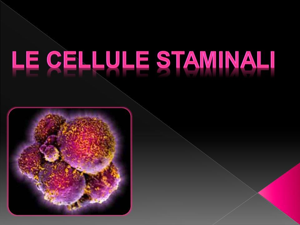 Le cellule staminali sono cellule il cui destino non è ancora deciso infatti vengono chiamate cellule primitive,non specializzate.