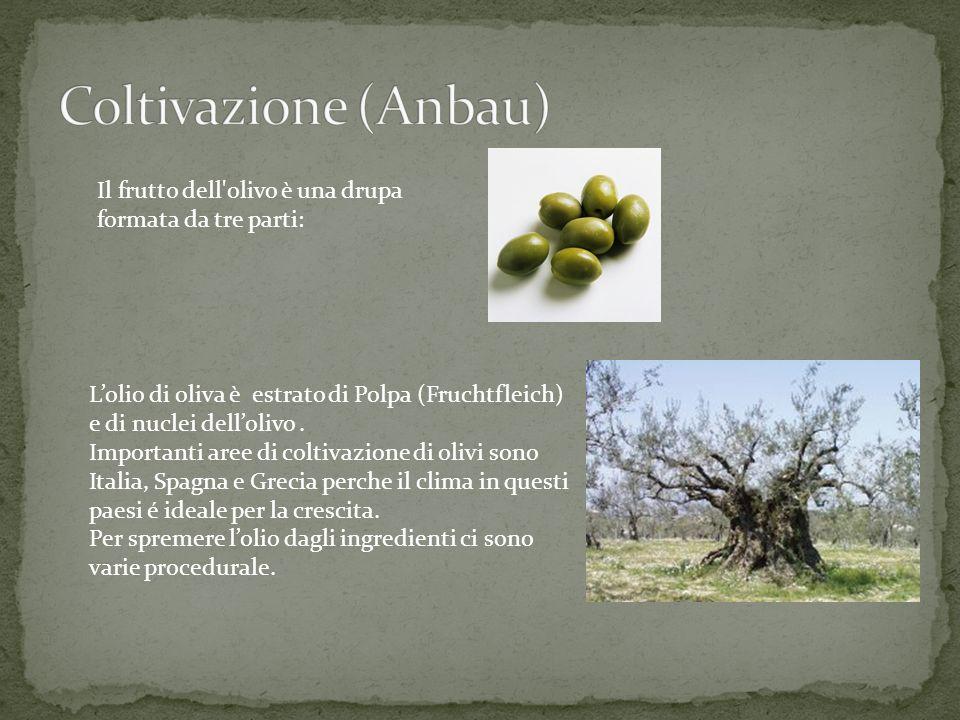 Il frutto dell'olivo è una drupa formata da tre parti: Lolio di oliva è estrato di Polpa (Fruchtfleich) e di nuclei dellolivo. Importanti aree di colt