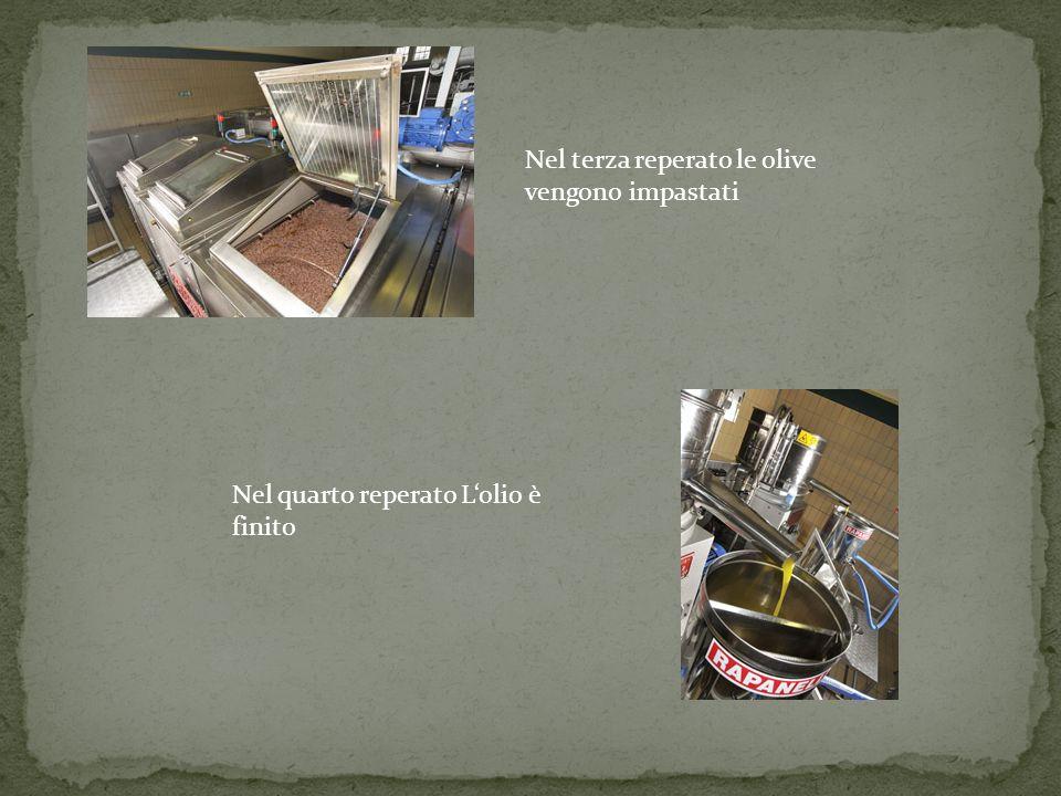 Nel terza reperato le olive vengono impastati Nel quarto reperato Lolio è finito