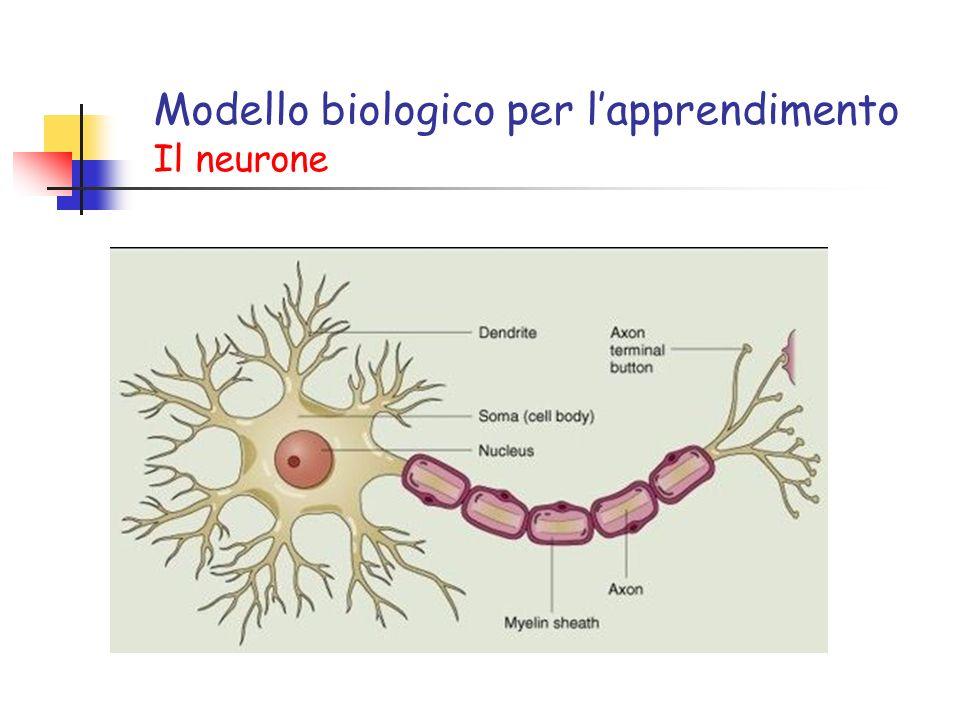 Modello biologico per lapprendimento Il neurone