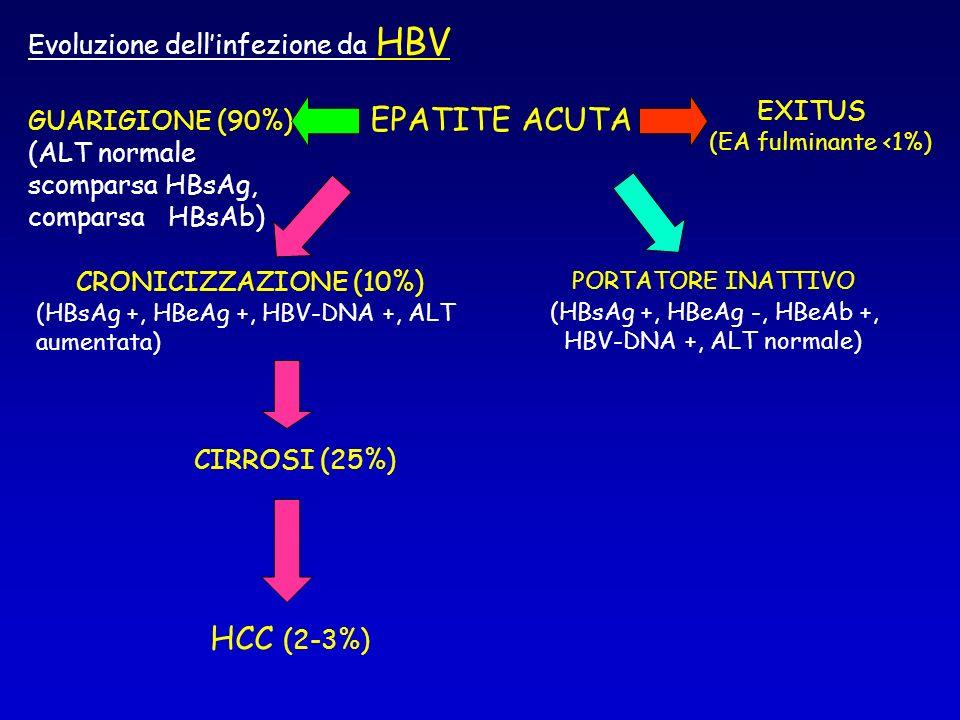 EPATITE ACUTA CRONICIZZAZIONE (10%) (HBsAg +, HBeAg +, HBV-DNA +, ALT aumentata) HCC (2-3%) GUARIGIONE (90%) (ALT normale scomparsa HBsAg, comparsa HB