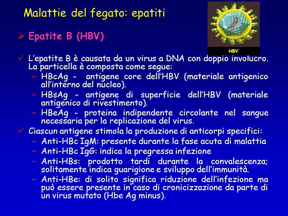 Epatite B (HBV) Lepatite B è causata da un virus a DNA con doppio involucro. La particella è composta come segue: –HBcAg - antigene core dellHBV (mate