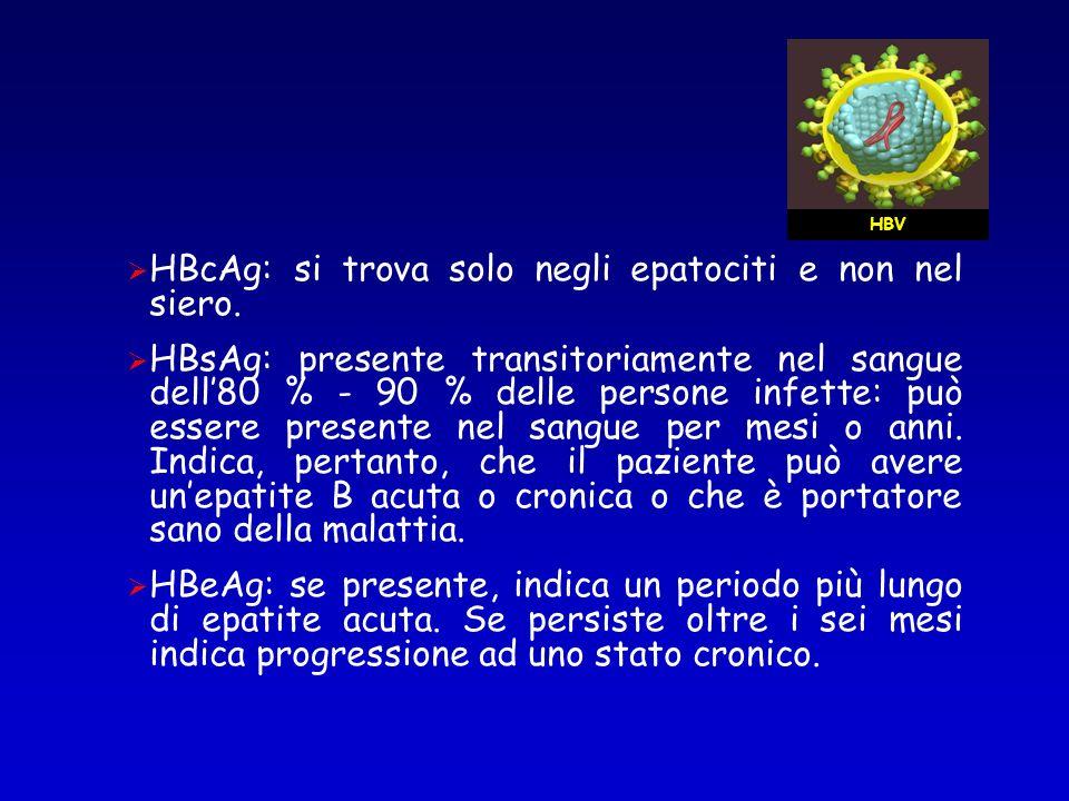 HBcAg: si trova solo negli epatociti e non nel siero. HBsAg: presente transitoriamente nel sangue dell80 % - 90 % delle persone infette: può essere pr