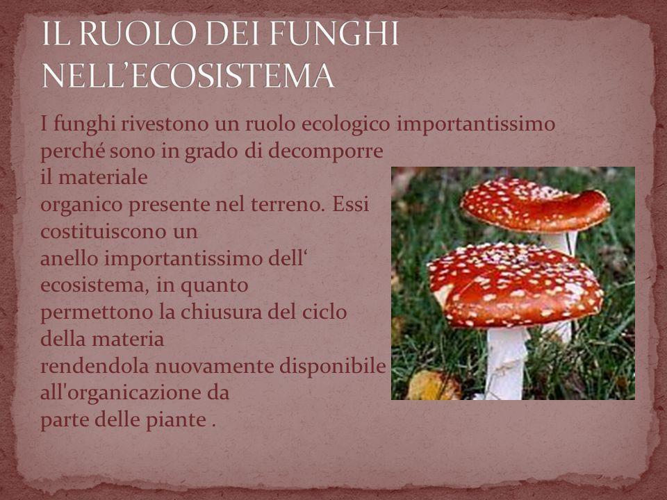 I funghi rivestono un ruolo ecologico importantissimo perché sono in grado di decomporre il materiale organico presente nel terreno.
