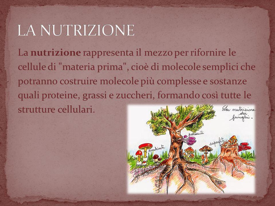 La nutrizione rappresenta il mezzo per rifornire le cellule di materia prima , cioè di molecole semplici che potranno costruire molecole più complesse e sostanze quali proteine, grassi e zuccheri, formando così tutte le strutture cellulari.
