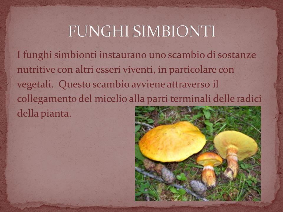 I funghi simbionti instaurano uno scambio di sostanze nutritive con altri esseri viventi, in particolare con vegetali.