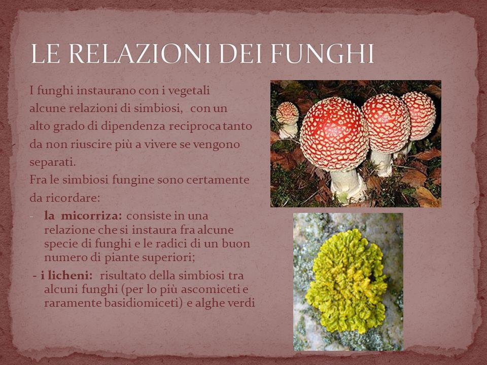 I funghi instaurano con i vegetali alcune relazioni di simbiosi, con un alto grado di dipendenza reciproca tanto da non riuscire più a vivere se vengono separati.