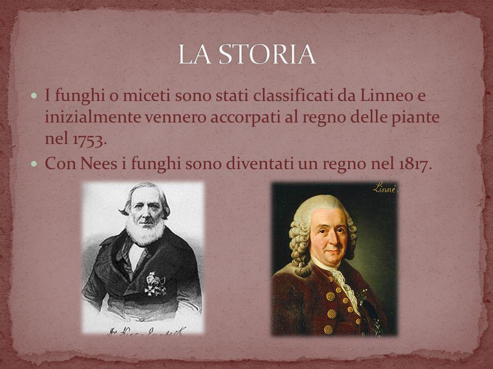 I funghi o miceti sono stati classificati da Linneo e inizialmente vennero accorpati al regno delle piante nel 1753.