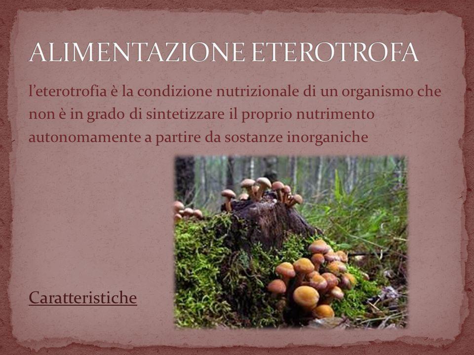 leterotrofia è la condizione nutrizionale di un organismo che non è in grado di sintetizzare il proprio nutrimento autonomamente a partire da sostanze inorganiche Caratteristiche